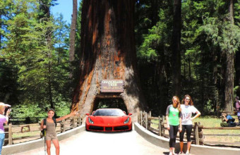 Visit redwood National park big redwoods